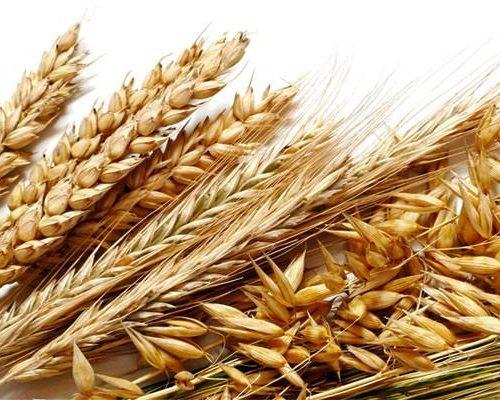 5-cereali-5-800x400-800x400